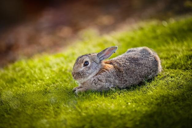 Śliczny królik w trawie