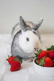 Śliczny królika królik i truskawki na stole