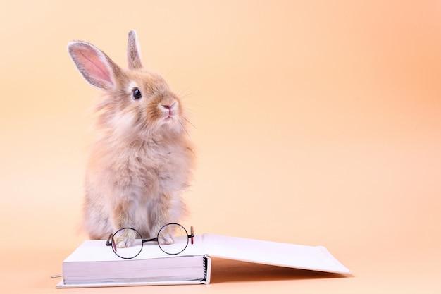 Śliczny królika obsiadanie na białej książce z szkłami umieszczającymi