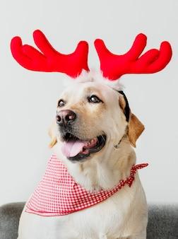 Śliczny labrador retriever jest ubranym poroże