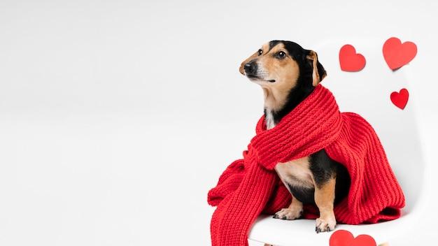 Śliczny malutki towarzysz zwierząt pokryty szalikiem
