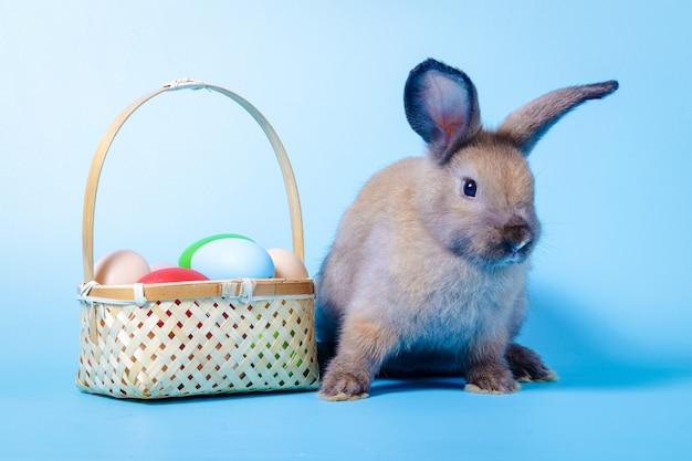 Śliczny mały brązowy królik z koszem kolorowych jajek jasnoniebieskie tło. koncepcje ssaków i festiwal wielkanocny