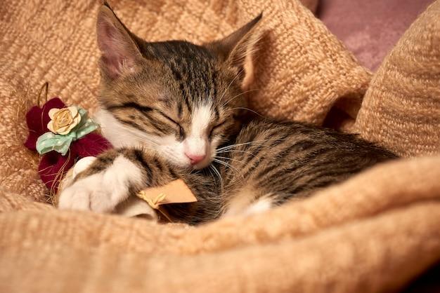 Śliczny mały kot śpi w łóżku na koc