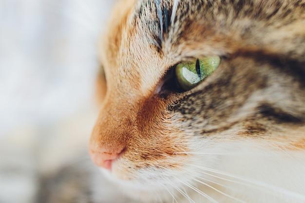 Śliczny mały kotek bengalski r. zauważył.