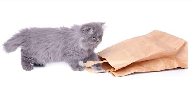 Śliczny mały kotek i papierowa torba