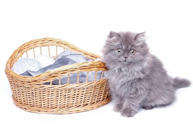 Śliczny mały kotek i wiklinowy kosz