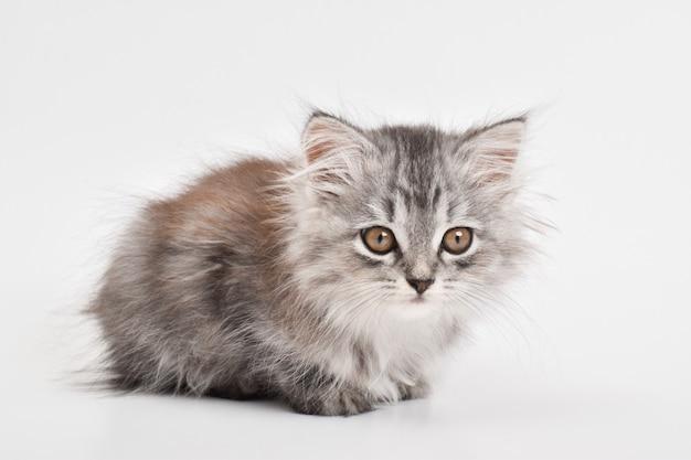 Śliczny mały kotek leży na białym tle. skopiuj miejsce.