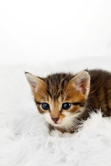 Śliczny mały kotek na futrzanym dywanie