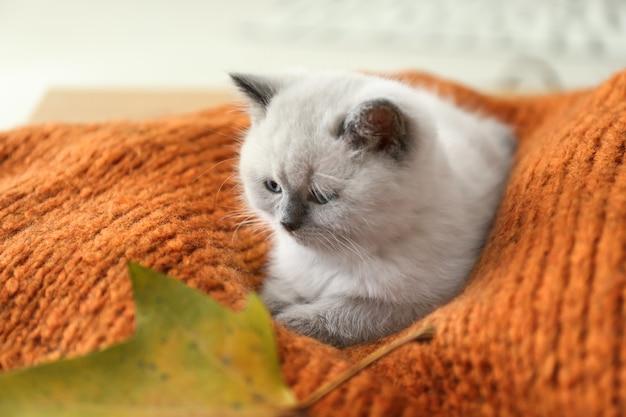 Śliczny mały kotek na kratę w domu