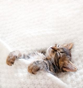 Śliczny mały kotek śpi na białym kocu futrzanym.