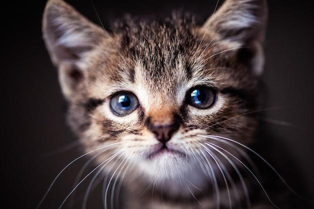 Śliczny mały kotek z niesamowitymi oczami. słodkie dziecko. kochany przyjaciel. świat zwierząt.