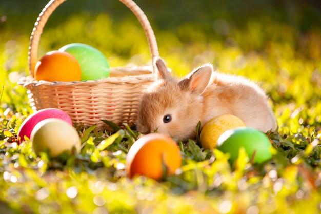 Śliczny mały królik i easter jajka w łące