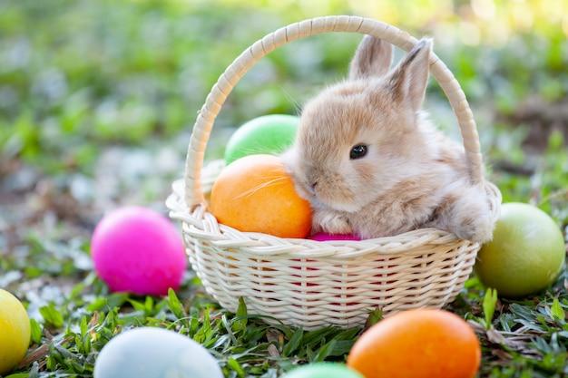 Śliczny mały królik w koszykowych i easter jajkach w łące