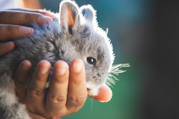 Śliczny mały królika królik w rękach