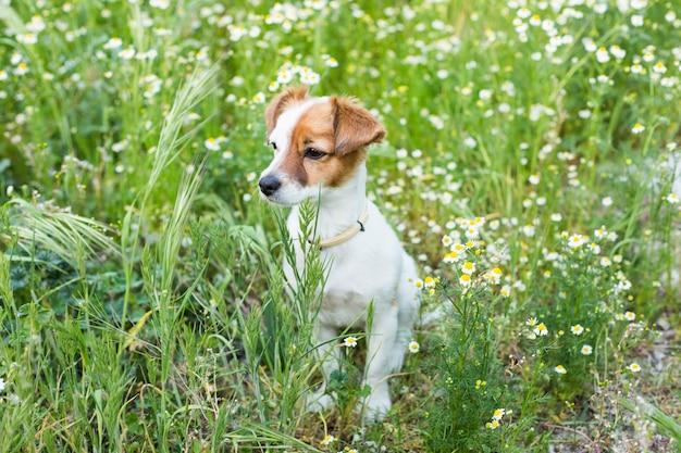 Śliczny mały młody pies wśród kwiatów i zielonej trawy. wiosna. koncepcja miłości do zwierząt. zwierzęta