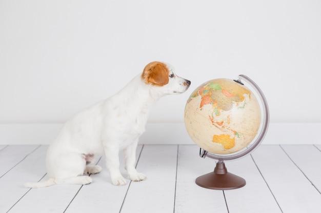 Śliczny mały piękny pies siedzi na podłodze, biała ściana ze światem świata poza tym. koncepcja podróży i edukacji. styl życia