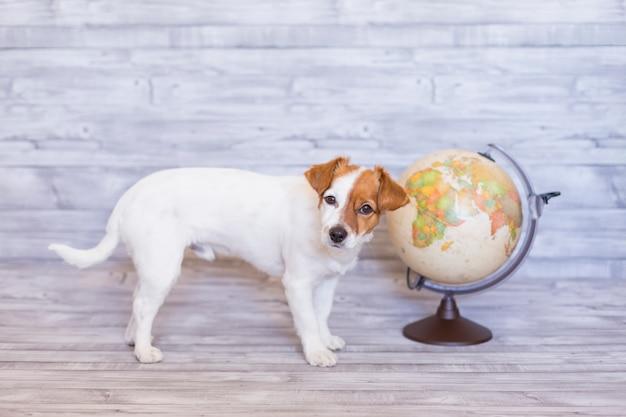 Śliczny mały piękny pies siedzi na szarość z światową kulą ziemską