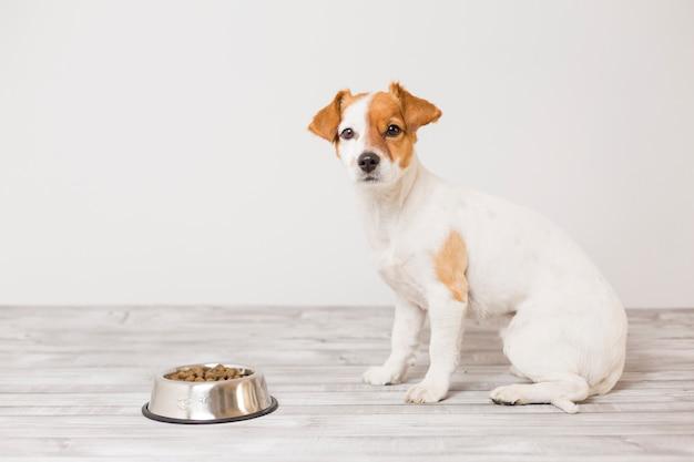 Śliczny mały pies siedzi i czeka jeść jego miskę karmy dla psów