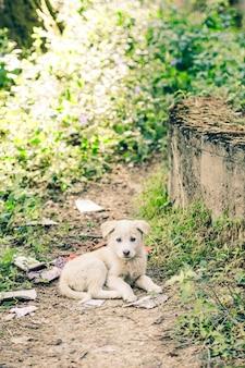 Śliczny mały pies uliczny w indyjskiej wiosce malana