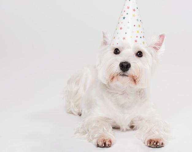 Śliczny mały pies w kapeluszu
