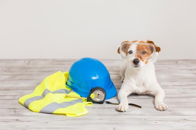 Śliczny mały pies z wyposażeniem ochronnym