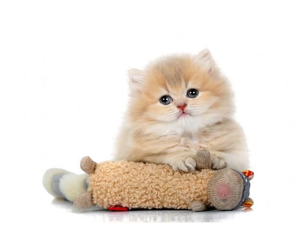 Śliczny mały puszysty kotek bawi się zabawkową myszką