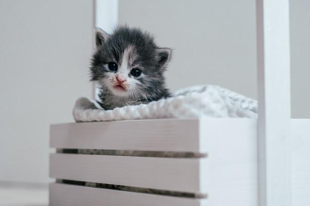 Śliczny mały szary i biały kotek siedzi w drewnianym koszu. śliczny zwierzak w domu?