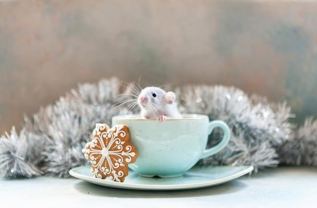 Śliczny mały szary szczur, mysz siedzi w dużym niebieskim kubku z piernikiem. nowy rok szczura. symbol chiński nowy rok