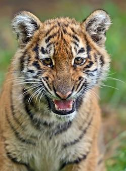 Śliczny mały tygrys grający na trawie