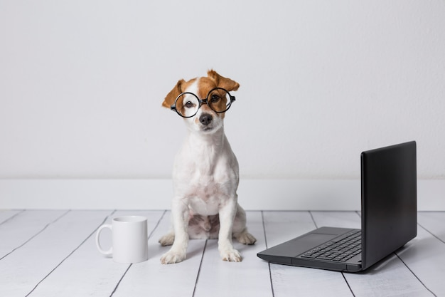 Śliczny młody małego psa obsiadanie na podłoga i działanie na laptopie. poza nim w okularach i filiżance herbaty lub kawy. zwierzęta w domu
