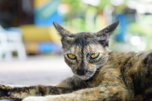 Śliczny perkal kot na zewnątrz