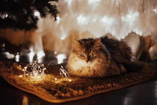 Śliczny piękny kotek w paski szary leżący na czerwonym kocu pod choinką z prezentami świątecznymi. piękne przytulne wnętrze, szczęście, świąteczny wystrój, pudełka, zabawki, nastrój, wesołych świąt.