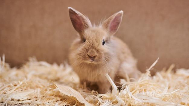 Śliczny, piękny królik w małym zoo