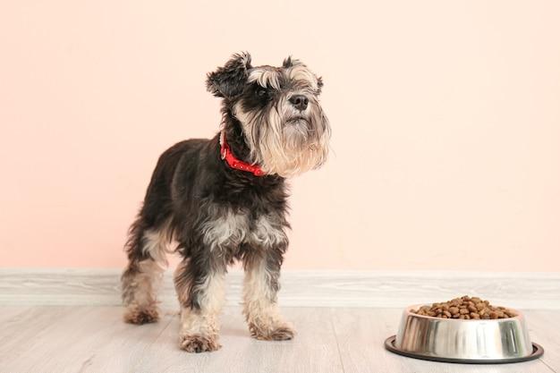 Śliczny pies i miska z jedzeniem w pobliżu kolorowej ściany