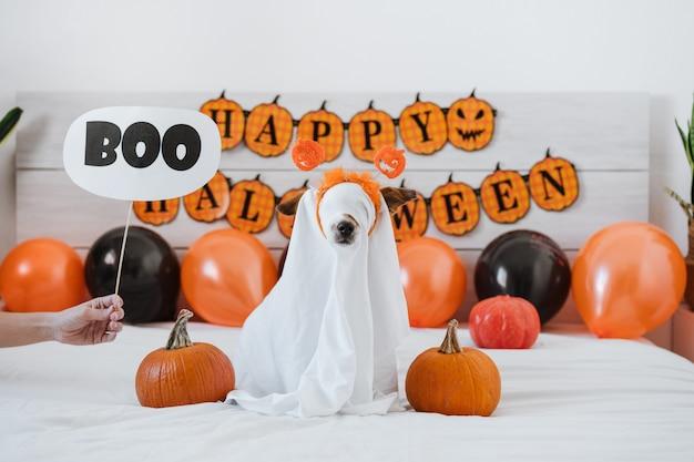 Śliczny pies jack russell w domu w kostiumie ducha. dekoracja tła halloween