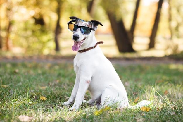 Śliczny pies jest ubranym okularów przeciwsłonecznych siedzieć
