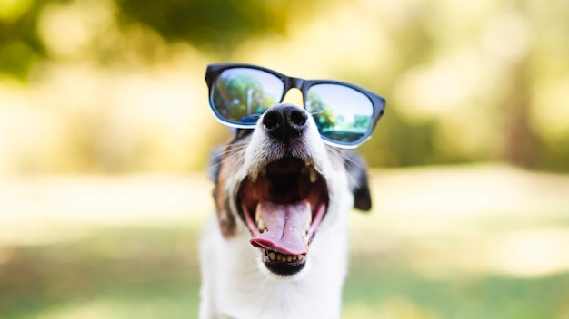 Śliczny pies jest ubranym okulary przeciwsłonecznych w parku
