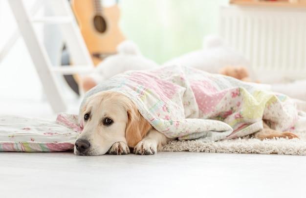 Śliczny pies leżący pod kocem