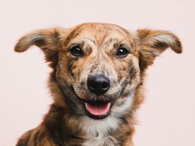 Śliczny pies patrzeje prosto przy kamerą
