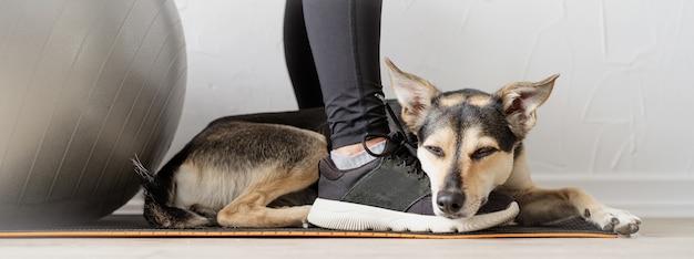 Śliczny pies rasy mieszanej leżący na stopach kobiety
