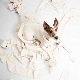 Śliczny pies robi ogromnemu bałaganowi z tocznym papierem