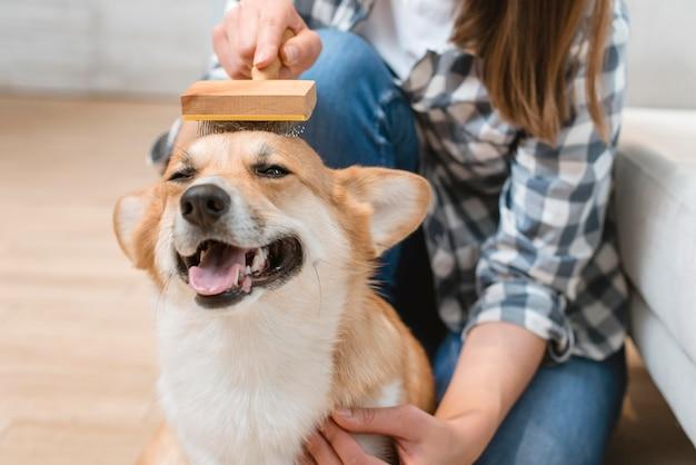 Śliczny pies szczotkuje kobietą