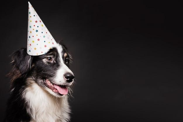 Śliczny pies w kapeluszu