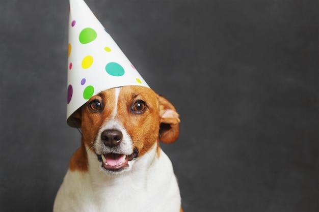 Śliczny pies w karnawałowym partyjnym kapeluszu