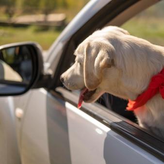 Śliczny pies w samochodzie