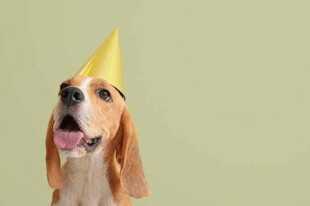 Śliczny pies w urodzinowym kapeluszu na kolorowym tle