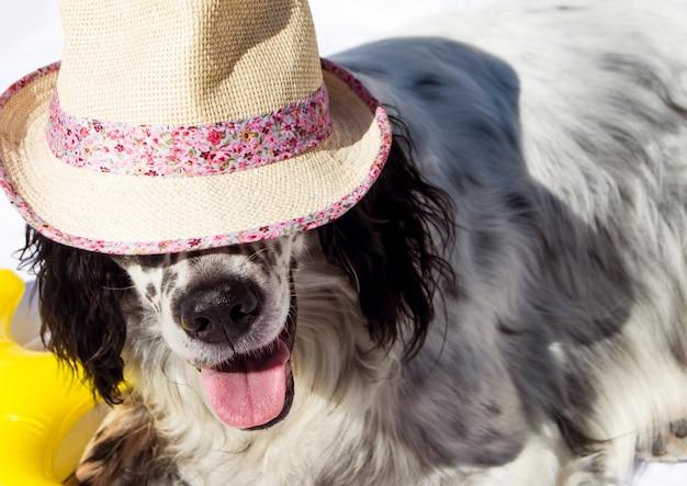 Śliczny pies z kapeluszem