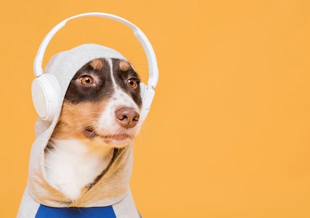 Śliczny pies z kostiumem