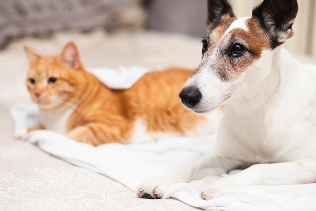 Śliczny pies z kota przyjacielem w łóżku
