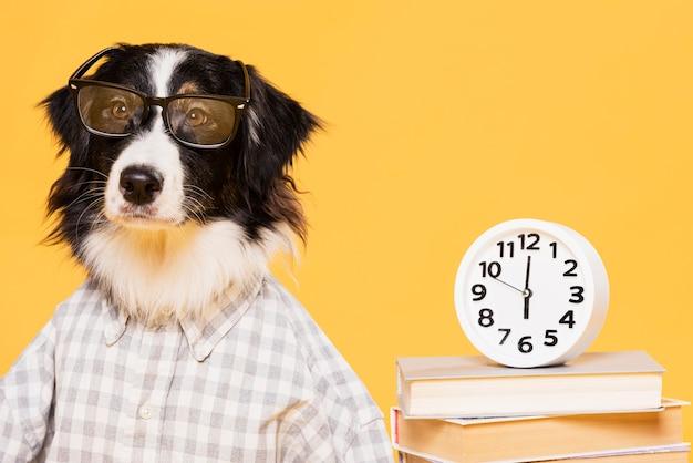Śliczny pies z zegarem